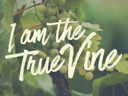 "Image result for ""I am the true vine."""